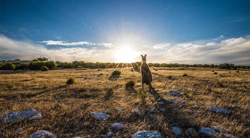 Kangaroo Island looks to the future